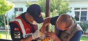 Jandarmanın bulduğu yaralı atmaca tedavi altına alındı