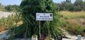 Hatay'da 489 kök kenevir ile 6 kilo 790 gram esrar ele geçirildi