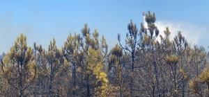 Orman yangının sebebi ATV aracı Orman yangınıyla ilgili Valilikten açıklama