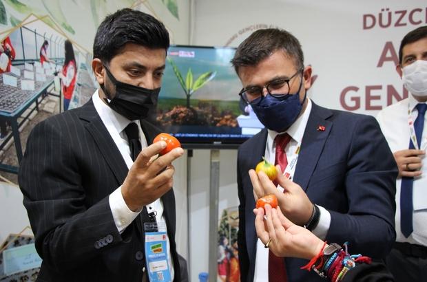 Ankara'ya ata tohumu damga vurdu