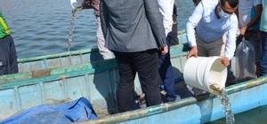 Isparta'da su kaynaklarına 933 bin 720 adet balık bırakıldı