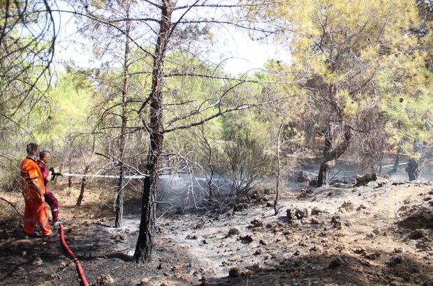 Ormana giriş yasağını delip haberleri olmadığını söylediler Yangının ardından, polis ve jandarmadan orman içinde şüpheli araştırması Polisin uyardığı vatandaşlar, ormana girişin yasak olduğunu bilmediklerini savundu