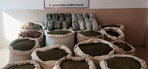Bingöl'de 591 kilo esrar ve 251 bin kök kenevir geçirildi: 3 gözaltı