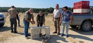 Enez'de 200 keklik doğaya bırakıldı