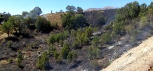 Adıyaman'da ormanlık alanda korkutan yangın Erken müdahale sonucu yangın kontrol altına alınarak söndürüldü