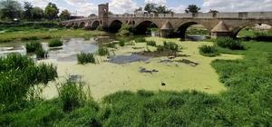 Tunca Nehri çöp ve yosunlarla kaplandı Meriç Nehri kumsala dönüştü