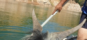 Baraj kayalığında 4 gündür mahsur kalan keçi 2 saatlik kurtarma operasyonu ile kurtarıldı