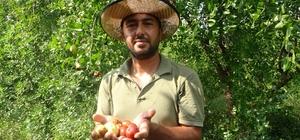 Yoldan geçen hünnap tüccarı hayatını değiştirdi Adana'da 10 ton hünnap üretip kilosunu 8 liradan satan çiftçi Şahin Bolat kazancının iyi olduğunu söyledi