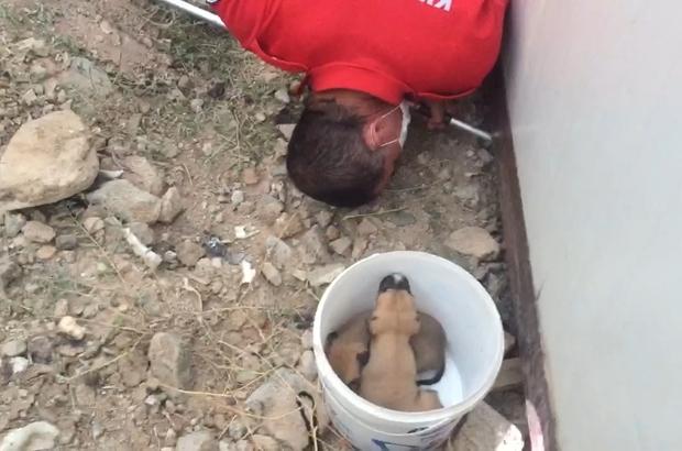 Konteyner altında mahsur kalan yavru köpekler kurtarıldı