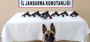 Hatay'da silah kaçakçılığı