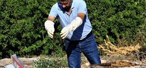 """1 milyondan fazla arısı zehirlendi, """"Hepsini çalsalar canım bu kadar yanmazdı"""" Mersin'in Erdemli ilçesinde bir veterinerin amatör olarak ilgilendiği 16 kovandaki yaklaşık 1 milyon 200 bin arısı böcek ilacı ile telef edildi Arıları telef olan Arif Aksay: """"Keşke çalınsaydı da arım telef olmasaydı. Hepsini çalsalar canım bu kadar yanmazdı"""""""