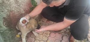 Yaralı yavru köpeği kurtarmak için 70 kilometre yol katetti