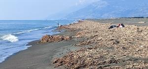 Samandağ sahilinin krizi bitmiyor Su Sümbülleri ve Petrol atıkları sahilde ilginç görüntüler oluşturdu