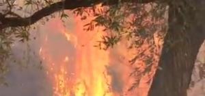 Hatay'da ormanlık alanda başlayıp zeytin bahçesine sıçrayan yangın söndürüldü