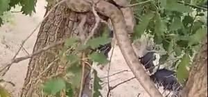 Elazığ'da 2 metrelik yılan paniği