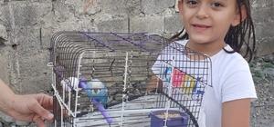 İtfaiyeciler kafesinden kaçan muhabbet kuşu için seferber oldu Yaklaşık 45 dakika sonra ağacın dalında yakalanan kuş kafese koyularak sahibine teslim edildi