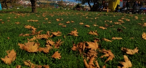 Tekirdağ'da Sonbahar güzelliği: Sahil alanda renk cümbüşü yaşanıyor
