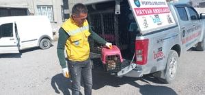 Pencerenin demir korkuluklarına sıkışan kedi kurtarıldı